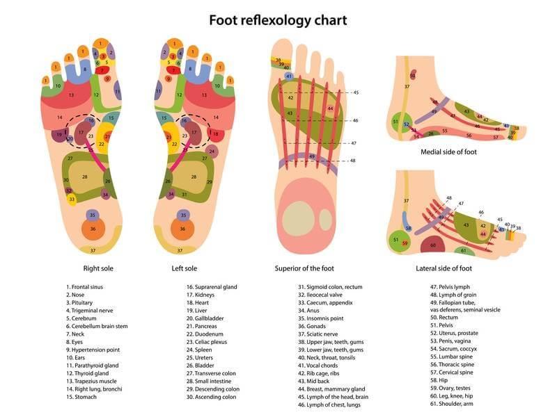 Diagrama resaltando puntos y zonas reflejas del pie derecho e izquierdo y los órganos a los que corresponden para uso en reflexología podal.