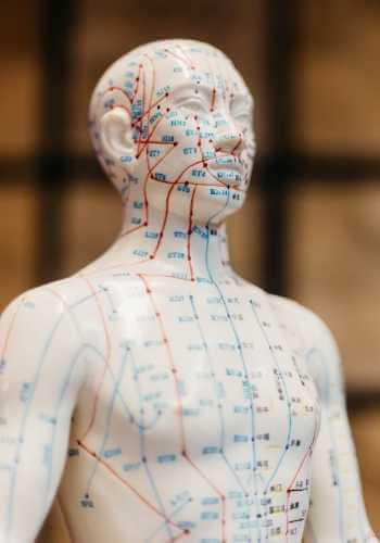 Maniquí que muestra los puntos y meridianos energéticos corporales.